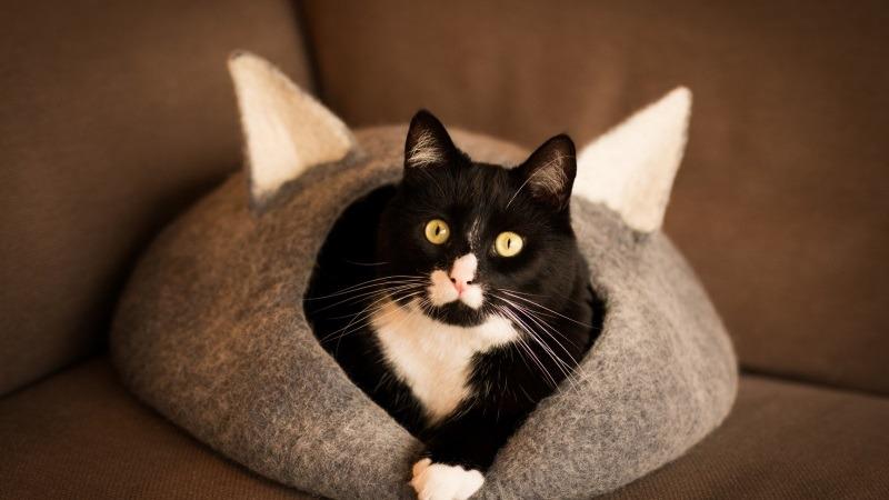 Как выбрать домик для котика