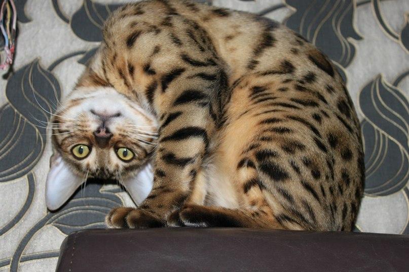 Выбираем имя для кошечки или котика: Все клички от А до Я
