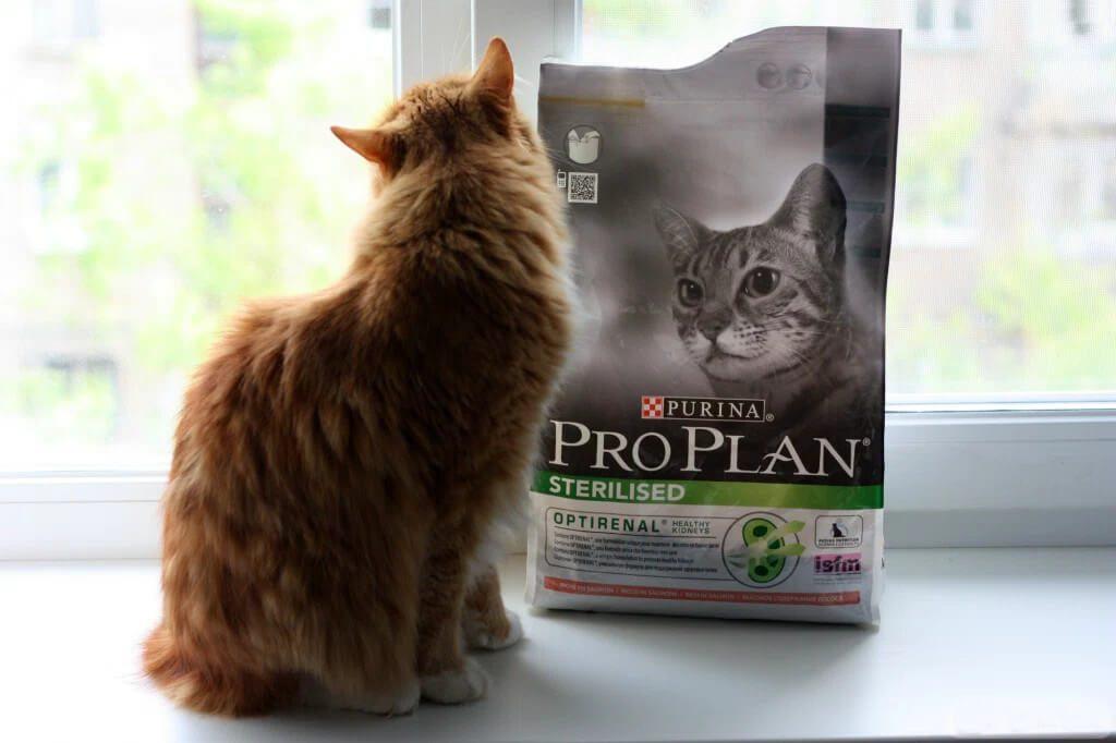 Обзор корма Pro Plan для кошек